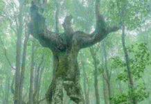 Beautiful Trees Photos, Beautiful Nature Photos, Beautiful Trees Images, Newsxpressonline